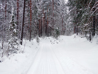 Forest road in the winter season