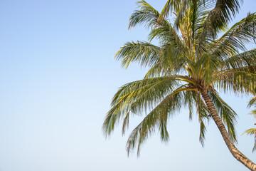 coconut on blue sky