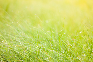 Abstract moisture grass background