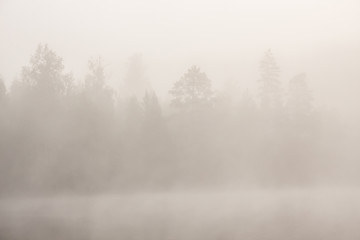 Trees at lakeside at foggy morning Fototapete