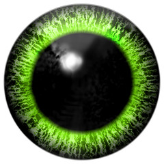 Green alien, frog or bird eye with wide black pupil