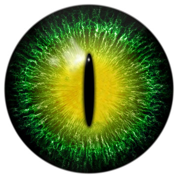 Green yellow cat, reptile or alien eye with narrow pupil