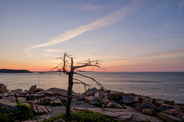 A old dead tree sits at the edge of the pink granite rocks overl