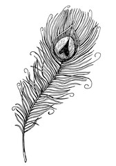 hand drawn peacock feather