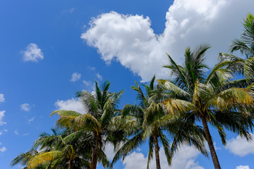 Tropical Palm and coconut trees against beautiful blue sky in th