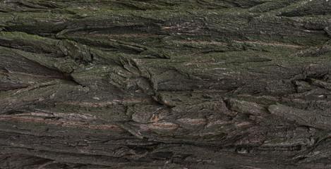 Tree trunk. №6