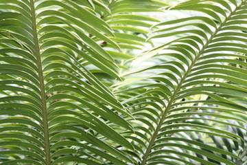 Spoed Fotobehang Tropische Bladeren Palmenpracht 3