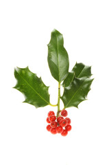 Isolated Holly sprig