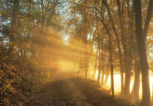 Sonnenstrahlen im Spätherbst - Herbst Bäume mit Abendsonne am Weg