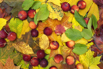 Beautiful colorful background with fallen leaves and red-ripe apples on the ground. Bright autumn colors. Image of natural materials. Eco style.