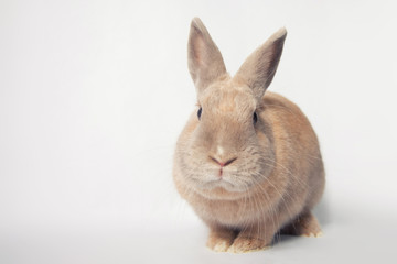 Adorable little rabbit with silly facial expression