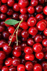 ripe cherries with a leaf