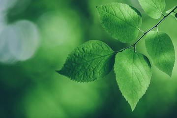 Green Leaves Fototapete