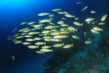 Underwater scene - fish on ocean coral reef