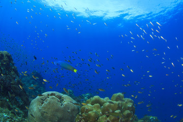 Underwater scene coral reef and fish in ocean