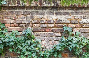 Wall Mural - Old red brick wall with green plant