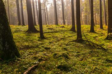 bunter Herbstwald mit Sonnenstrahlen