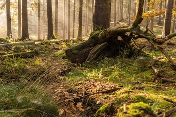 bunter Herbstwald mit Wurzel und Sonnenstrahlen