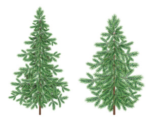 Christmas green spruce fir trees