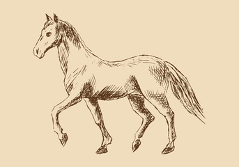 Sketch of horse. Vector hand drawn illustration.