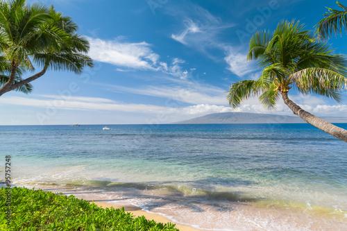 деревья, тропики, лето, гавайи загрузить
