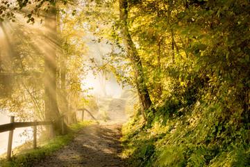Herbstnebel am Waldweg im ersten Morgenlicht
