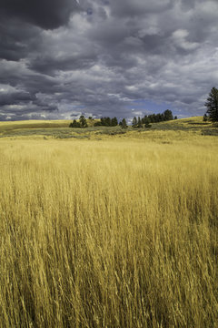 Yellowstone National Park - Golden Field of Light