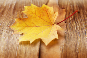 Autumn leaf on wooden background