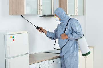 Exterminator In Spraying Pesticide In Kitchen