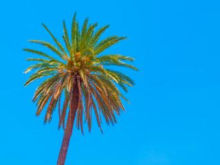 Palm tree on a blue sky background