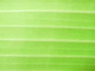 Detail of Green leaf texture background