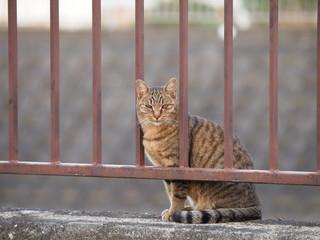 柵から顔を出す猫