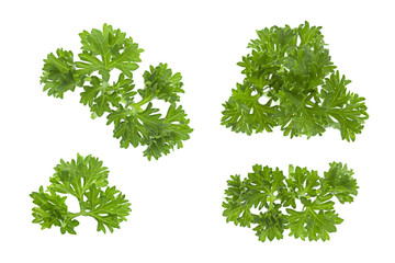 Curly parsley on white