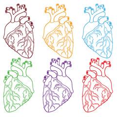 Set of Human hearts. Vector illustration.