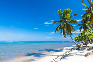 tropical sand beach with palm trees, vacation concept