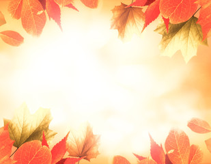 orange autumn background with leaves