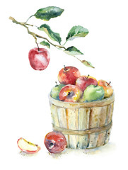 Watercolor apples in the basket and on the branch