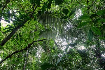 Tropical Plants, Amazonian Jungle