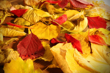 Background of red and yellow autumn leaves, close-up