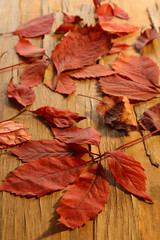 Background of red autumn leaves on wooden table, close-up