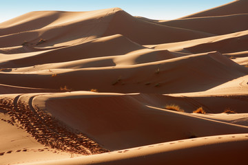 Sand dunes at sunrise, Sahara, Morocco