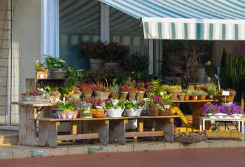 Baskets and pots with plants on the wooden benches in front of t