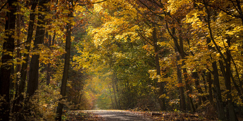 A beautiful view of a path through a forest in golden autumn light