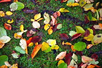 Fallen autumn leaves on grass background