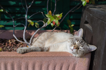 Domestic cat playing outdoors
