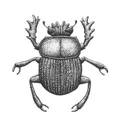 Scarab Engraving Illustration