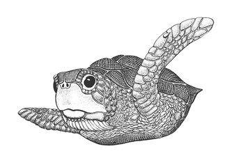 Sea Turtle Engraving Illustration