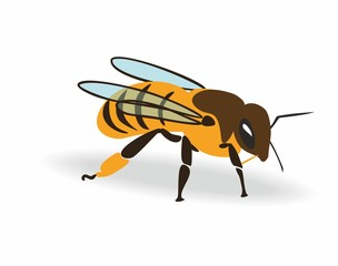 Honey bee. Colored cartoon bee. Whole Body with bees wings