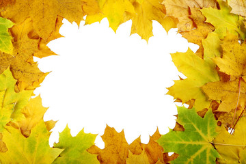 Autumn leafs on a white background