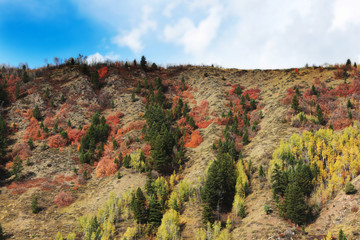 Wall Mural - Mountainside Fall Colors
